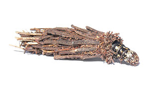 Bagworm Moth (larva and casing)