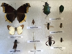 Quick-pix A : 12 Insects kit
