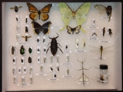 Quick-pix D : 50 Insect kit